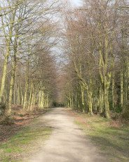 [Bacton Wood walks, Norfolk]