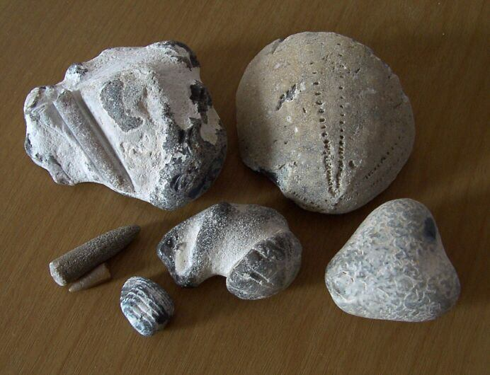 [Photo of fossils found on Bacton beach.]